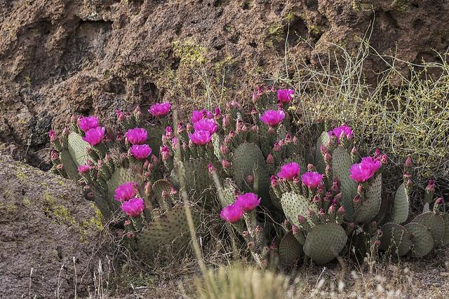 Cactus 2_7D2_050416