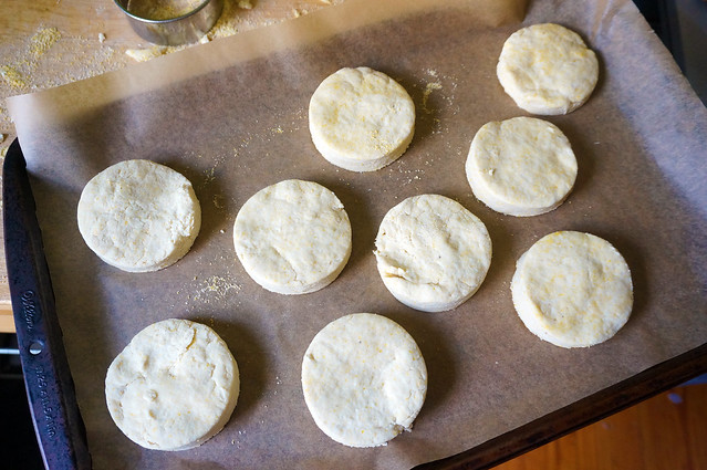 Perfect circles of uncooked biscuits sit on a baking tray lined with parchment paper. Biscuit cutters are magical.
