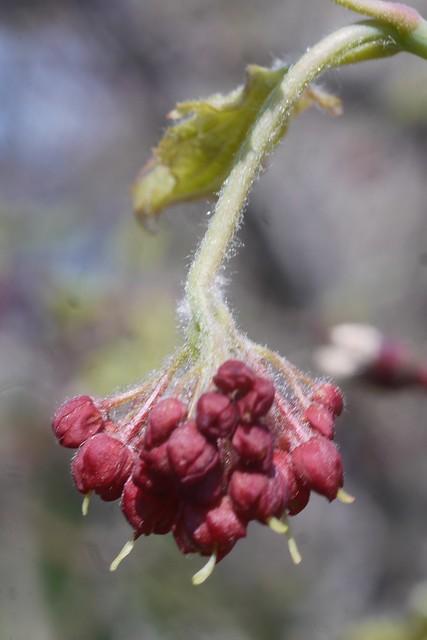 土, 2016-03-26 14:31 - Brooklyn Botanic Garden