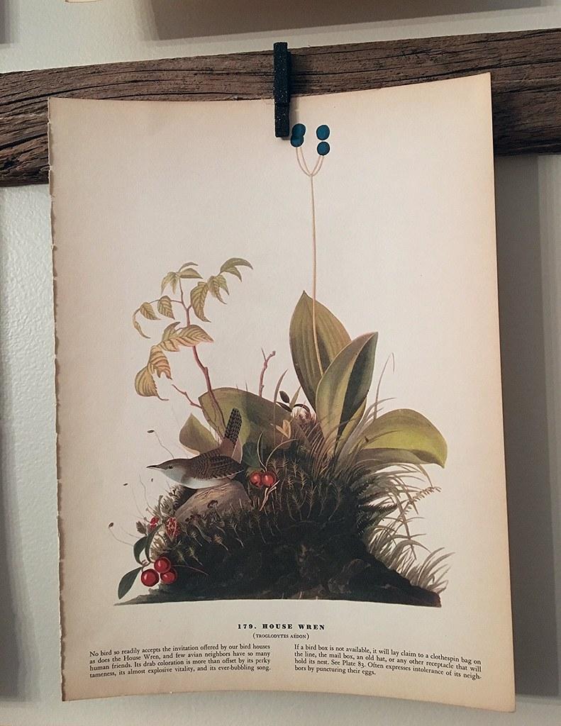 Vintage House Wren Print