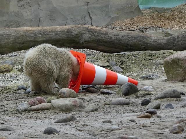 Eisbär Lili