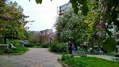 حديقة الأشرفية