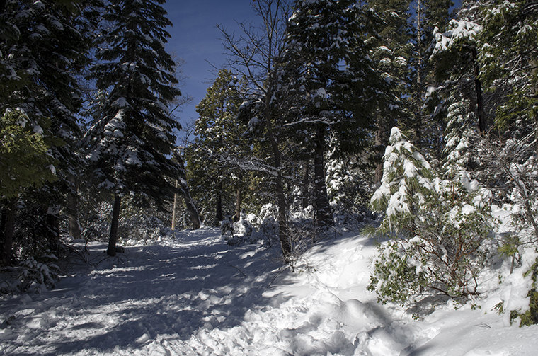 Suburban winter 11