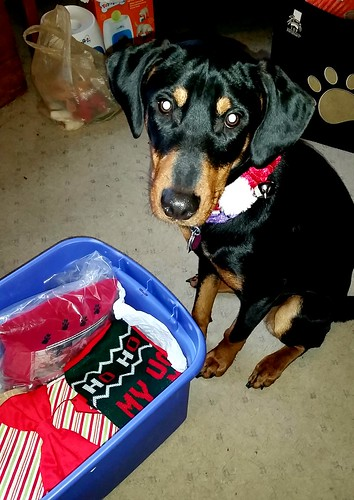 Doberman Puppy Mix First Christmas - Lapdog Creations