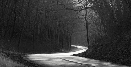 trees blackandwhite nature monochrome landscape