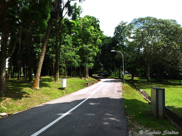 Bukit Timah Ave 01