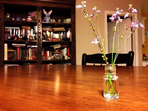 tiny arrangement