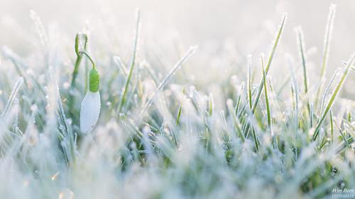 winter cold macro canon is nederland usm koud alblasserdam f28l ef100mm macrofotografie canonspeedlite580exii wimboon canoneos5dmarkiii