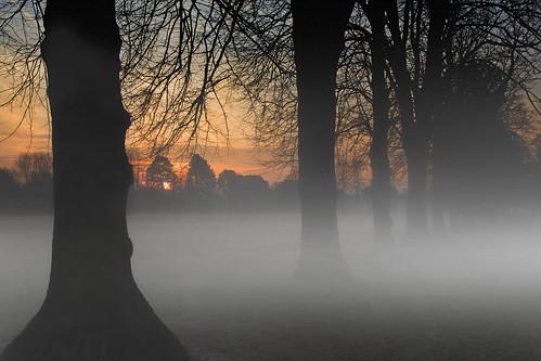 road park uk morning light shadow red sky sun mist tree grass leaves fog wales sunrise canon eos dawn britain outdoor branches cymru cardiff caerdydd fields 5d redsky llandaff pontcanna wentloog llandafffields stevegarrington