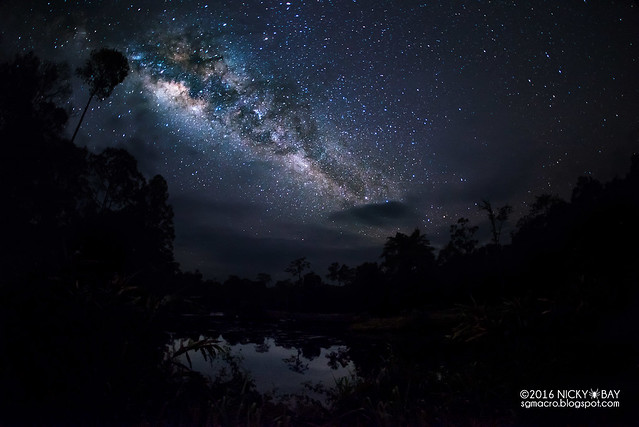 Maliau Basin Milkyway - DSC_0249
