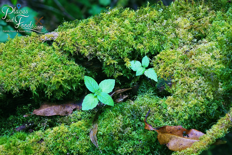 doi inthanon ang ka nature trail moss close up