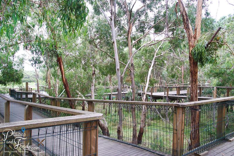phillip island the koala conservation centre platform