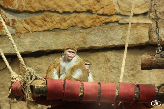 Frühlingstag im Zoo Berlin 03.04.201641