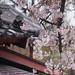 Shitennō-ji by michaelrcfj