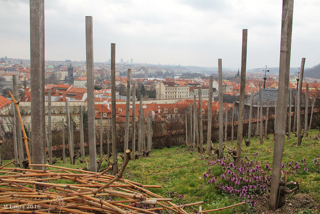 St. Wenceslas' Vineyard