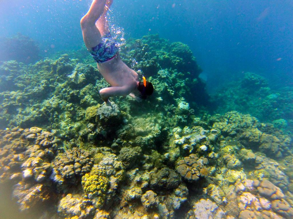 Excursión al arrecife en las islas caimán con el MSC Opera al fondo islas caimán - 26276612355 4bbeeff64d b - Snorkel en las Islas Caimán