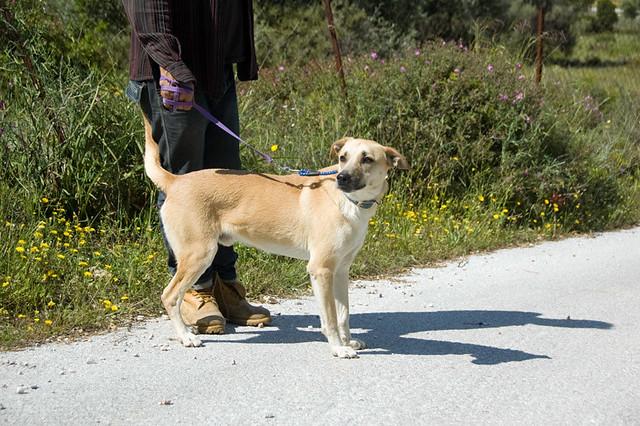 Sylvio for adoption