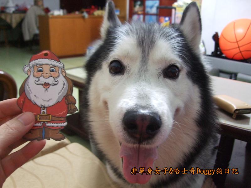 Doggy聖誕節紅色聖誕樹髮箍裝扮07