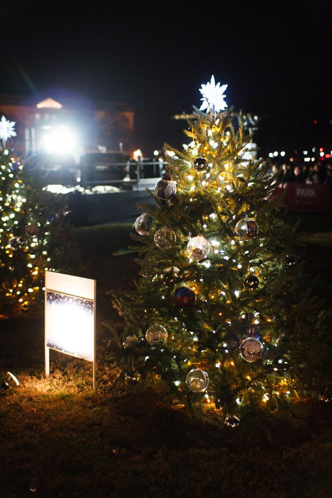 Washington, D.C. Christmas Trees (4 of 6)