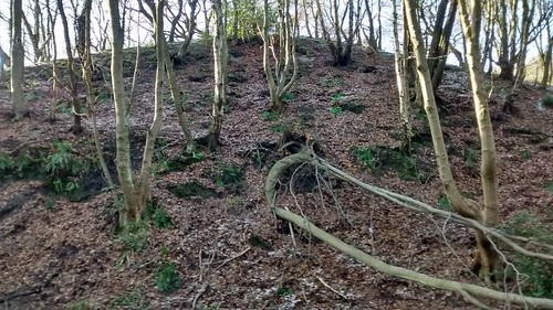 Washingwell Woods Jan 16 (3)
