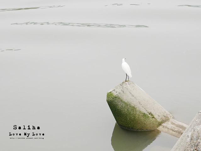 社子島溼地水鳥自行車道 (40)