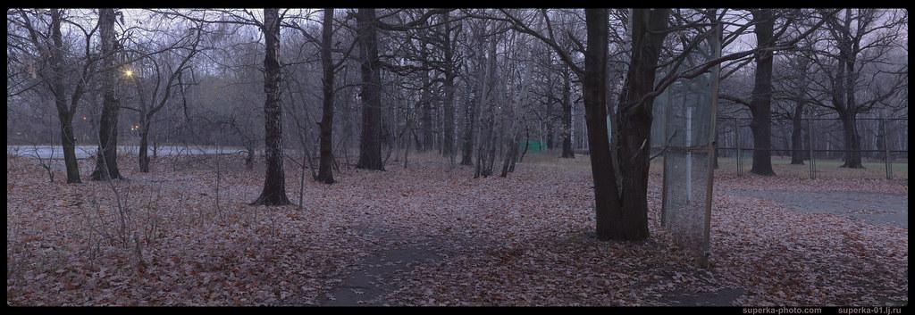 Park trees Pano 08-03_2K0000