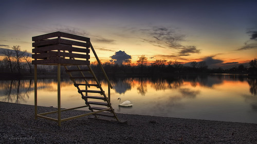 trees light sunset sky lake beach nature clouds reflections evening swan mood shadows outdoor dusk atmosphere zagreb jarun