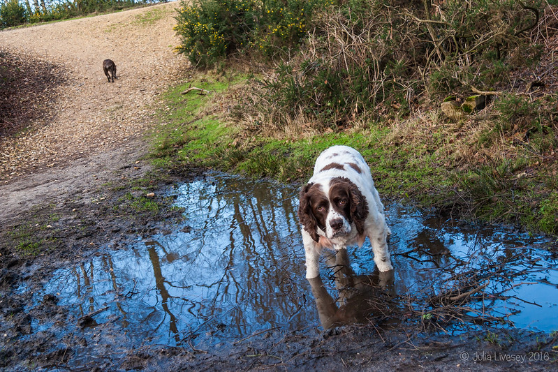 A favourite muddy puddle