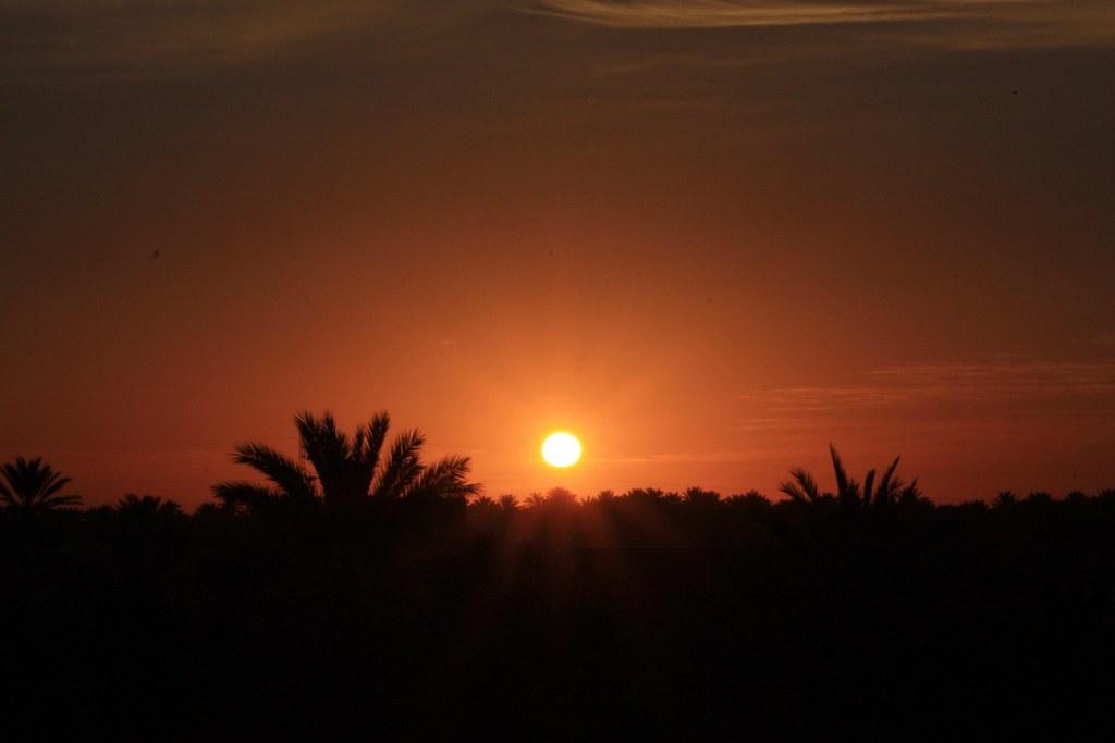 Túnez. Amaneciendo sobre el palmeral