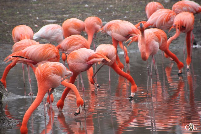 Besuch Tierpark Friedrichsfelde 14.02.201640