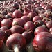Onions Red drying