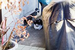 Today's Cat@2016-04-06