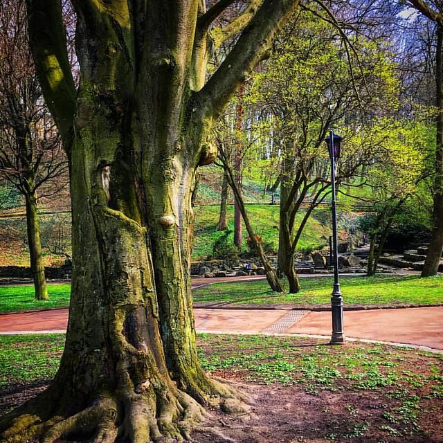 #lviv #ukraine #lvivua #ualviv ##стрийськийпарк #львів #львов #україна #украина #парк #park #lviving #lvivingram #lvivgram #lvivblog #spring #nature #natureofukraine #vsco #vscolviv #travel #travelgram #travelingram
