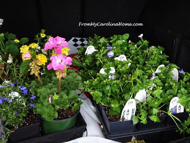 Trunkful of flowers