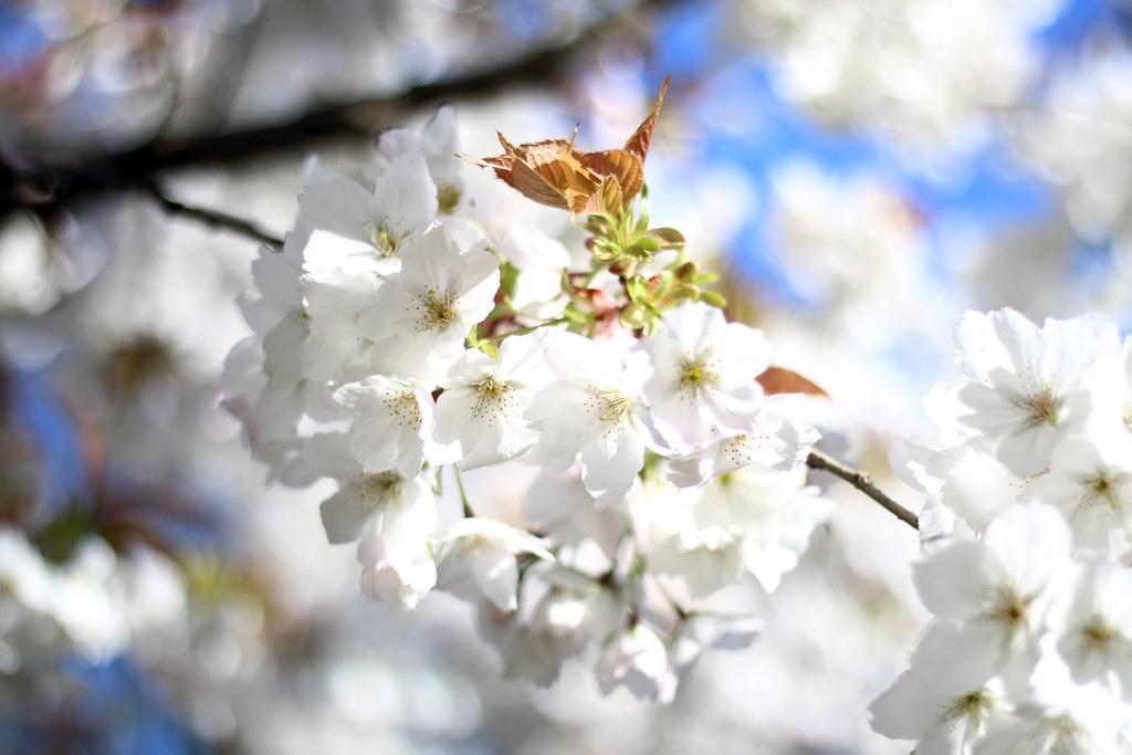 beautiful-white-flowers