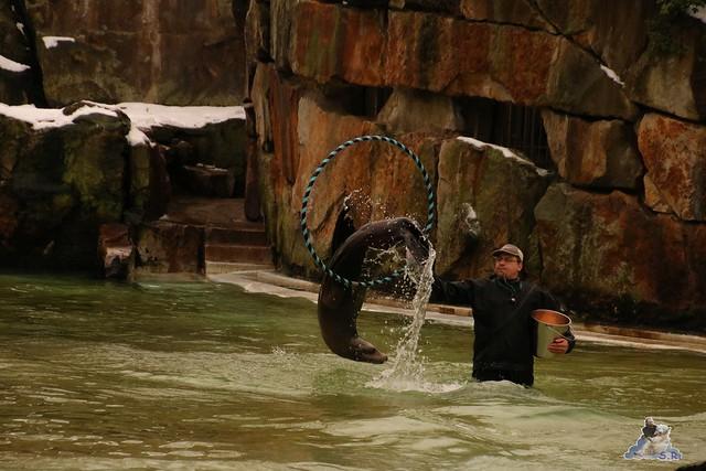 Zoo Berlin 08.01.2015  043