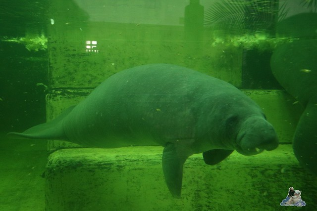 Tierpark Berlin 09.01.2016  0136