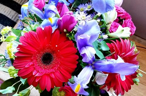 #freshcutflowers #Valentines2016 #gerberdaisy #LapdogCreations ©LapdogCreations