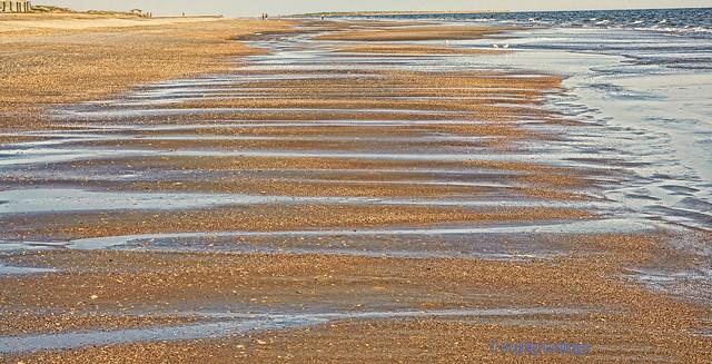 Carolina Coastal Sand