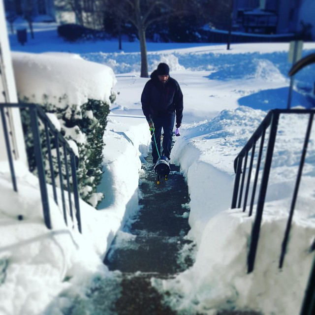All I can say is that @kenyc24 is awesome. Shovels snow and walks Cher without any complaint. 😍😘👏 #cherstagrams #snowmageddon