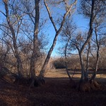 Dried-up Pond and Trees