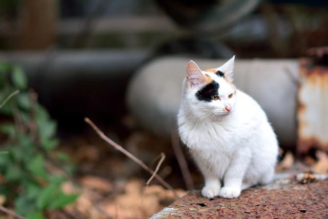 ネコの写真2