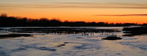 sunset bird nebraska birding cranes migration aweinspiring sandhillcrane platteriver comingintoroost