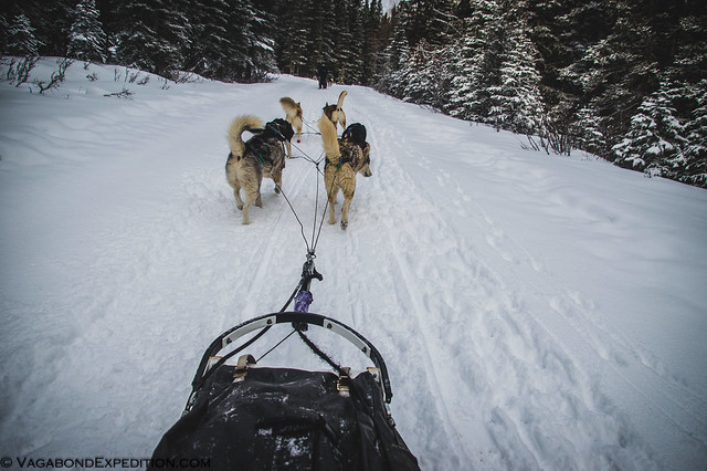 hike on - not mush - is the keyword for this team of six dogs pulling the vagabondexpedition team sled through the trails