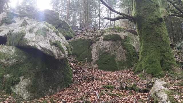 Outcrops in Rough Tor Plantation