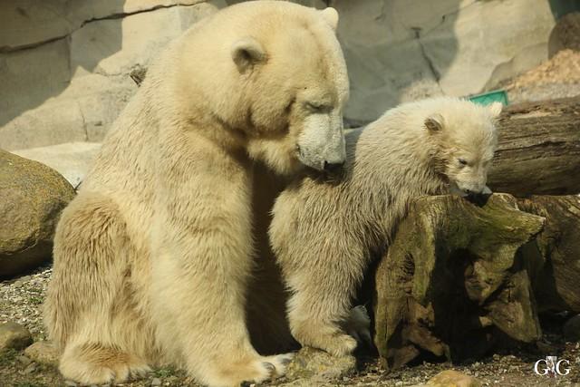 Zoo Bremerhaven 09.04.16 1.Teil70