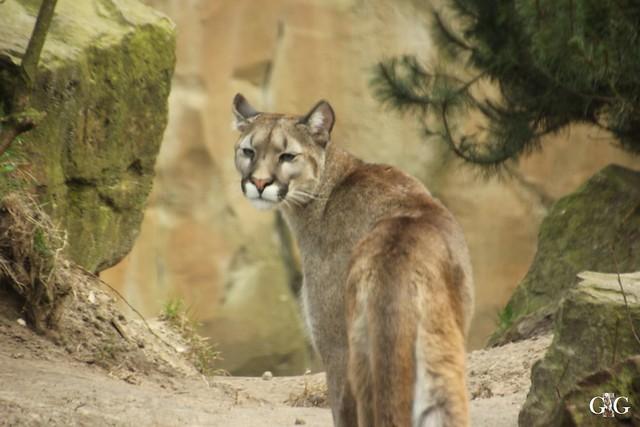 Zoo Bremerhaven 09.04.16 2.Teil111