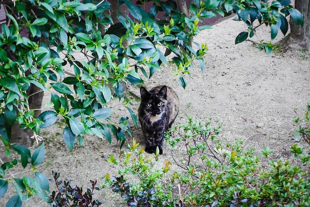 Today's Cat@2016-04-01