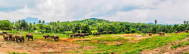 P4193402 Pano Vagamundos16 Sri Lanka Orfanato Elefantes Pinnawala Vagamundos 16 Sri Lanka Orfanato Elefantes Pinnawala