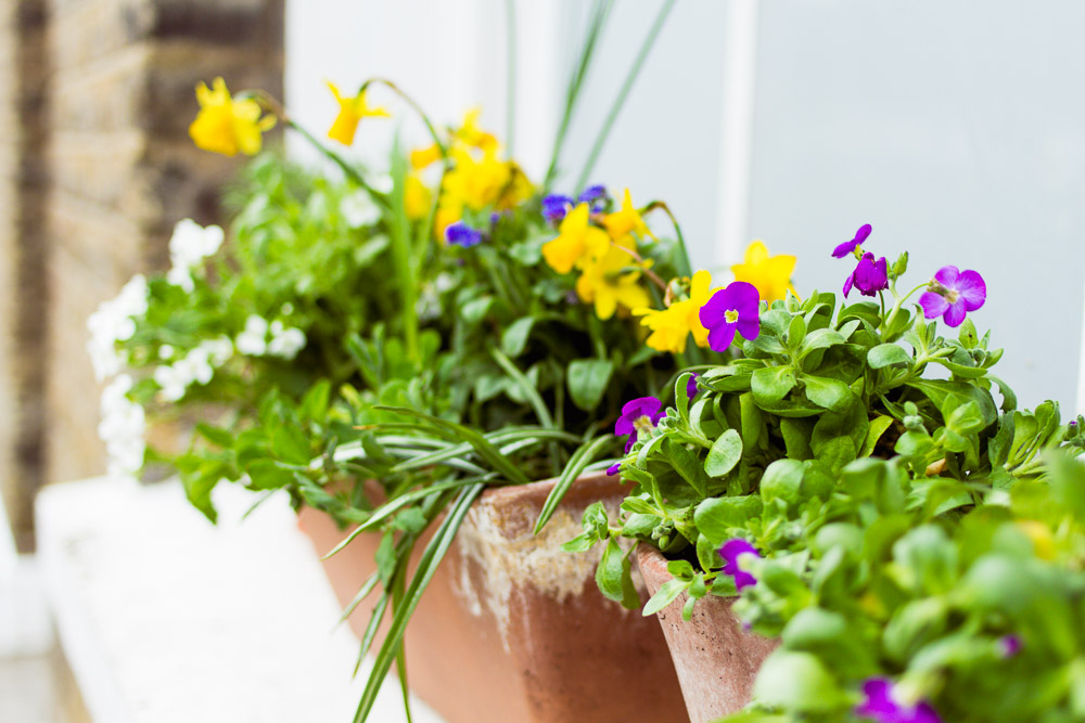 flowers in pots on a windowsill